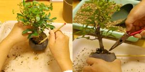 盆栽の作り方 箸でしっかり
