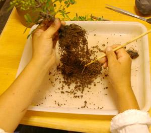 盆栽の作り方 植物