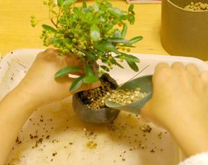 盆栽の作り方 土を入れる