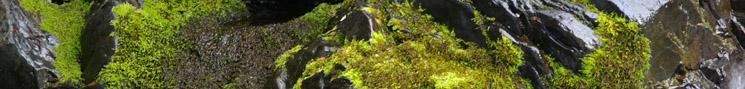 過去の盆栽・苔玉