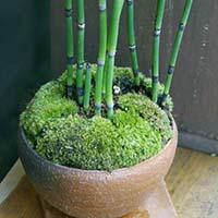 盆栽植え込みセット