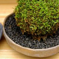 苔玉に敷いたり、盆栽の装飾に【化粧砂】