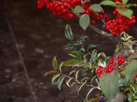季節の苔玉寄せ植え